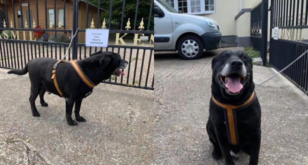 Off Side Encontraron a un perro amarrado a una reja